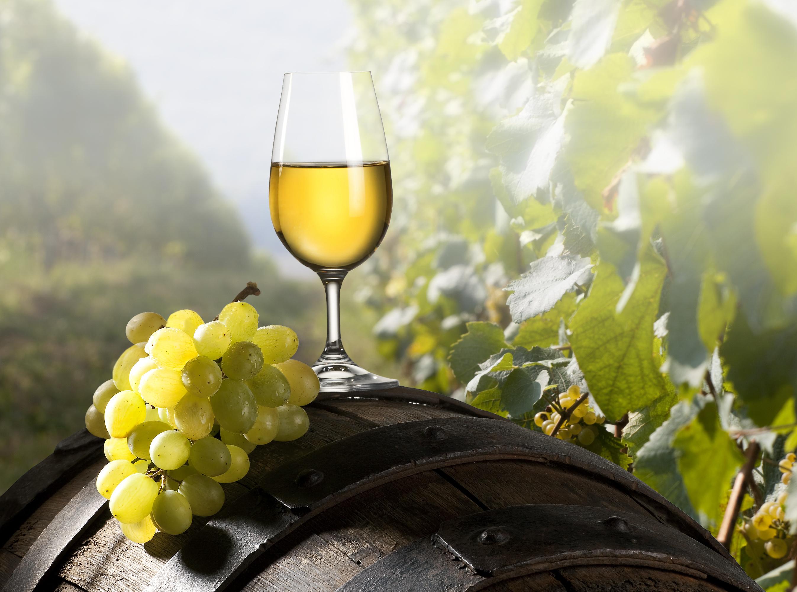 Winnender Weinfrühling