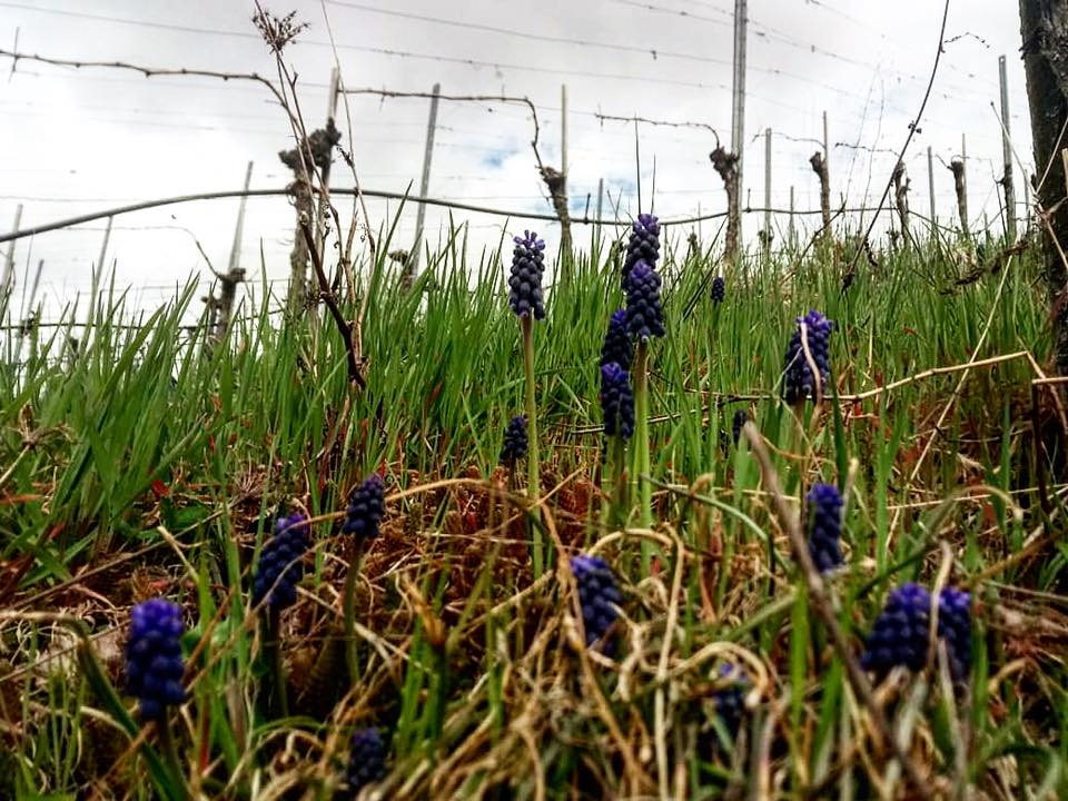 Weinwanderung Winnenden